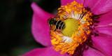Bizzy bee!