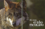 Mexican Wolf pictures used in ProNatura magazine from Mexico