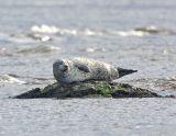 _JFF0837 Seal.jpg