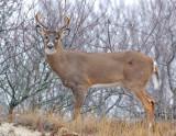 _JFF3699 Deer Fell Looking Left.jpg