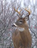 _JFF3714 Deer Profile Look Left.jpg