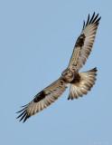 _JFF6414 Rough Legged Hawk.jpg