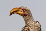 Doves to Hornbills