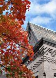 Fall colors on 11th St. NE