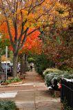 Fall color on A St. NE