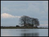 Home of the White-tailed Eagle! jpg