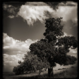 At The Farm (like Holga)