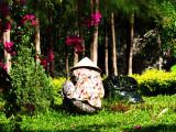 La jardinière.
