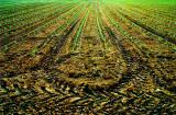 Agriculture chevronnée.