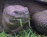 Galapagos 2004