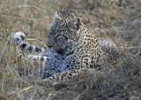 Lion Sands South Africa 2004