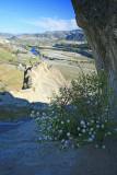 Spring Flowers In  Peshastin Pinnicles
