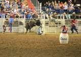 Bull Riders Are Crazy!!! ( Fact ),,,,,,,,