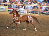 Two Time Suicide Race Winner And His Horse In Native Paint