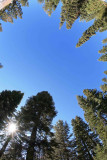 Great Sky At Sierra Pines Near 7300 ft.!!