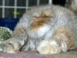Sundae's Fluffy Tail