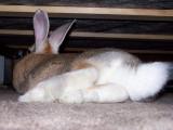 Butterscotch's  Cute Little tail!