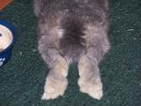Rufus Tail - Kerrie