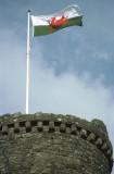 Welsh flag flies over Harlech Castle (UK)