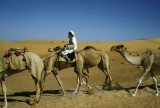 Bedouin camel train, even then a very rare sight
