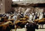 Cattle market in Tinehir, southern Morocco