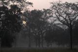 Dawn at Corbett