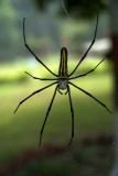 Spider, Corbett
