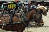 Indonesia: Dokar or horse cart transport, East Java