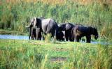 Elephants in Liwonde National Park