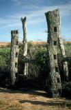 Ruined stockyard at Dalhousie Springs