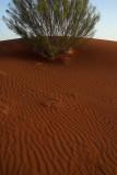 Dune crest, outside Windorah