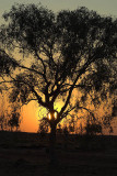 Bush sunset, Windorah