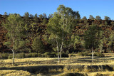 Finke riverbed at Palm Valley campground