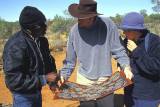 Walpiri artist in discussion with tourists