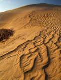 Imperial Sand Dunes & Sand Verbena