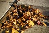November 9th - Leaves