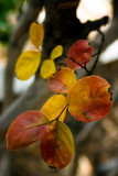 November 24th - A Touch Of Fall Color