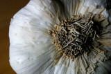 December 4th - Garlic