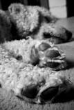 December 9th - Big Feet