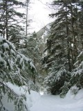 Trail to Avalanche lake