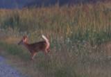 Deer Moet