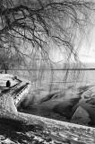 Cayuga Lake Front