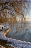 Cayuga Lakefront