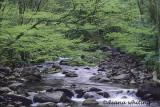 Greenbriar  Area Smoky Mountains