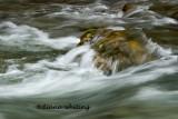 Rushing Waters3