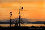 Sunrise Raquette Lake- Adirondacks