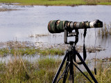 HEAVY ARTILLERY. The 350D + Sigmonster + Canon 2x TC struggles to bring the distant ducks closer.... even 1600 mm was not enough firepower to make the birds full frame.  [1DM2 + 100-400 IS, hand held]