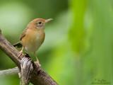 Backyard Birds in Paranaque