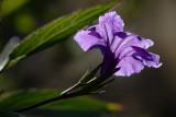 20061211 -- 5905.jpg  Canon 5D + Sigma 150mm / 2.8 macro @ f / 8, 1/250, ISO 100