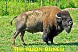 The Bison Bunch at Big Bone Lick State Park